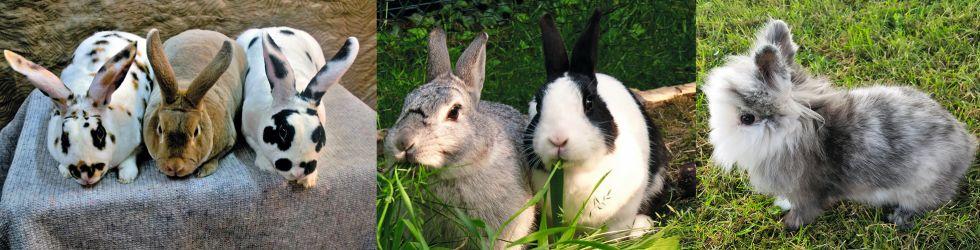 Kaninchen (© by RÖK)